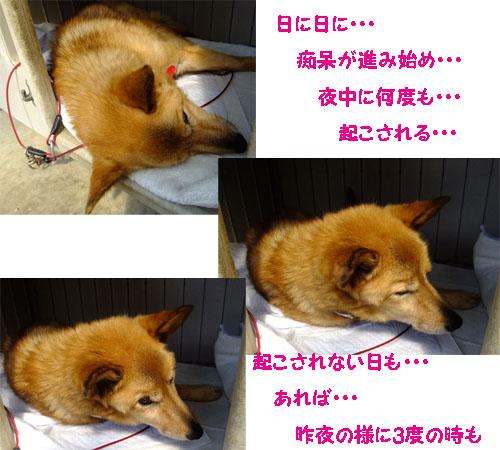 f0032418_139783.jpg