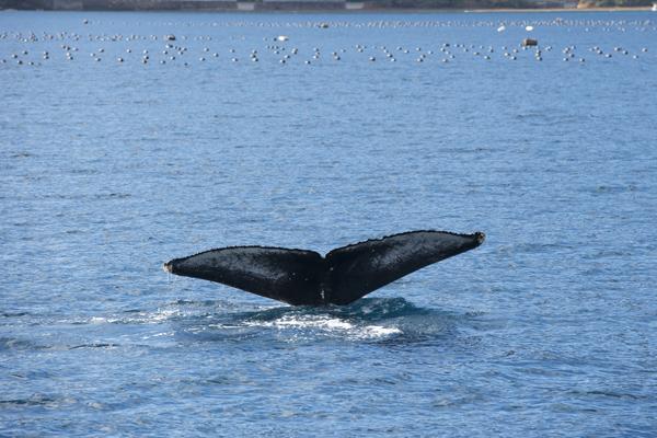 1月22日 大島海峡 薩川湾_f0062839_19135254.jpg