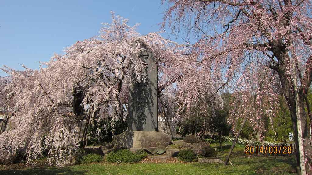 満開になった東郷寺の枝垂桜_f0044056_9365453.jpg