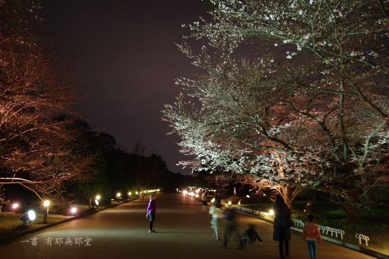 京都府立植物園 2014夜桜_a0157263_22312920.jpg