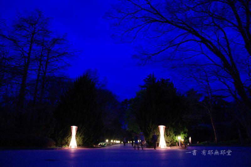 京都府立植物園 2014夜桜_a0157263_22312932.jpg
