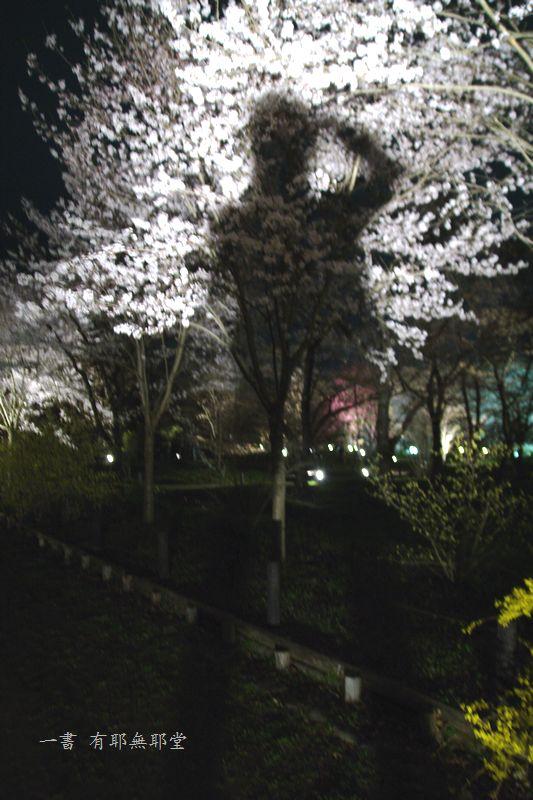 京都府立植物園 2014夜桜_a0157263_22312938.jpg