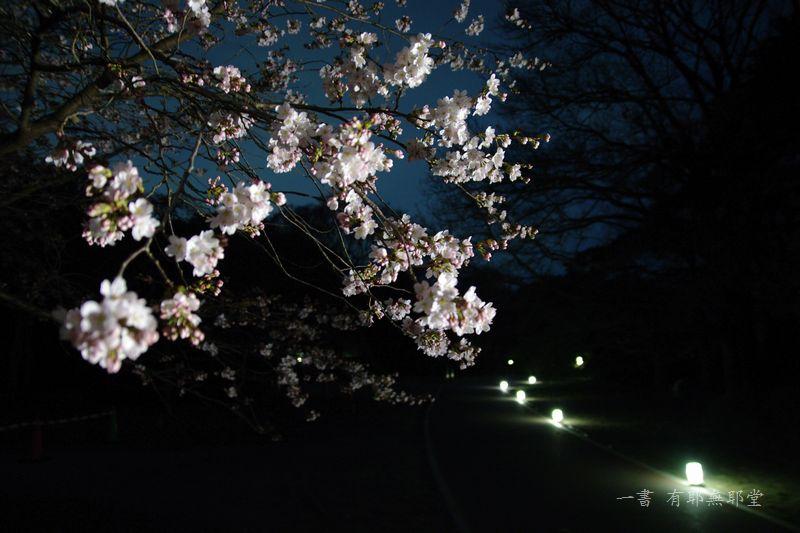 京都府立植物園 2014夜桜_a0157263_22312939.jpg