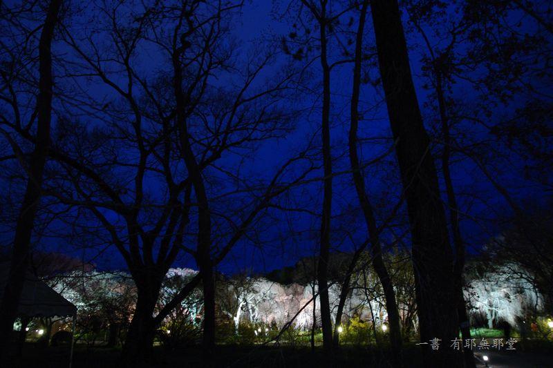 京都府立植物園 2014夜桜_a0157263_22312952.jpg