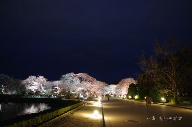京都府立植物園 2014夜桜_a0157263_22312961.jpg