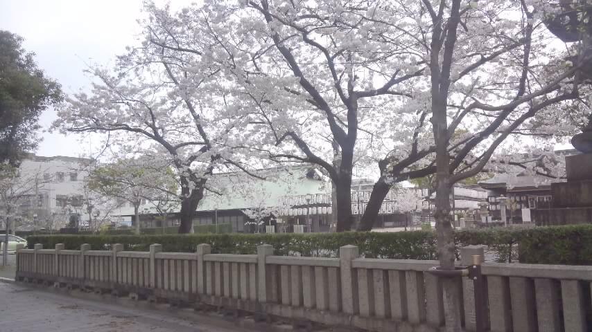 春のお祭りの準備が着々と_d0188464_1171240.jpg