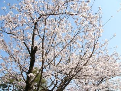 2014年 お花見!!_f0203164_11361275.jpg