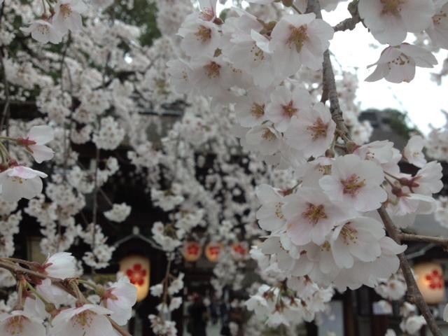 3月29日 平野神社の桜_a0023466_23135938.jpg