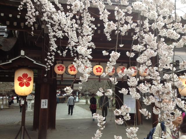 3月29日 平野神社の桜_a0023466_23142157.jpg