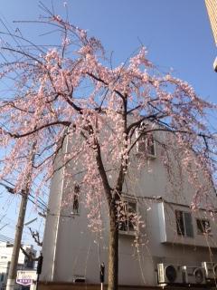 3月28日 こうして春が訪れてくる_a0023466_8304495.jpg