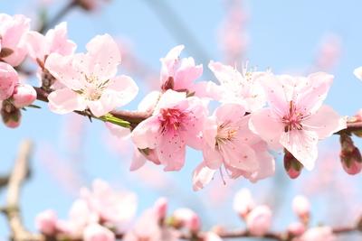 春休みは模様替え_f0245967_0452344.jpg