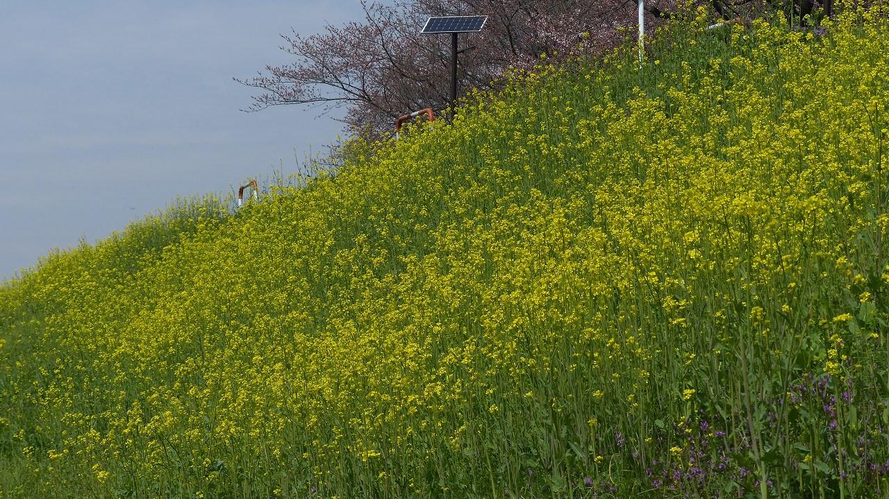 【 日記 2014 3/29(土) 】 ちょこっと花見_a0185081_152065.jpg