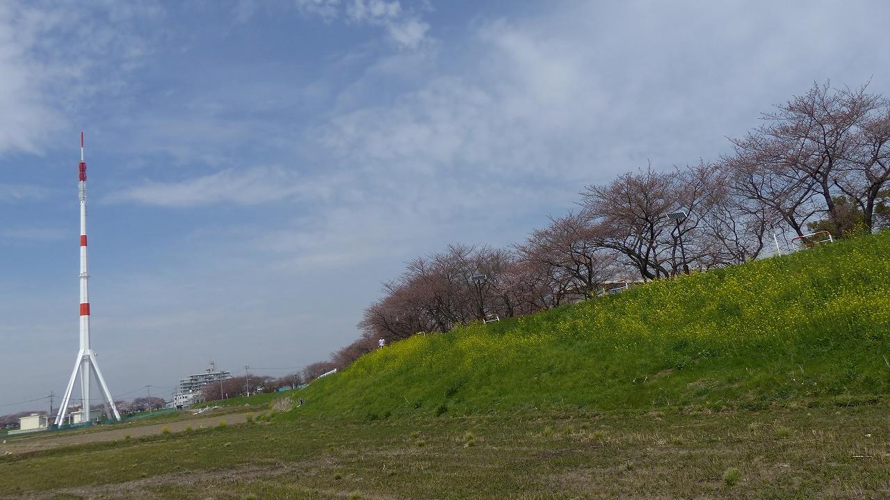 【 日記 2014 3/29(土) 】 ちょこっと花見_a0185081_152212.jpg