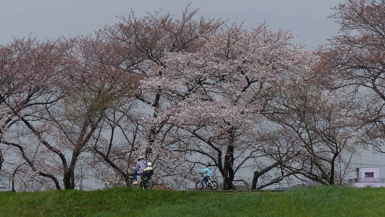 【 日記 2014 3/29(土) 】 ちょこっと花見_a0185081_1562940.jpg
