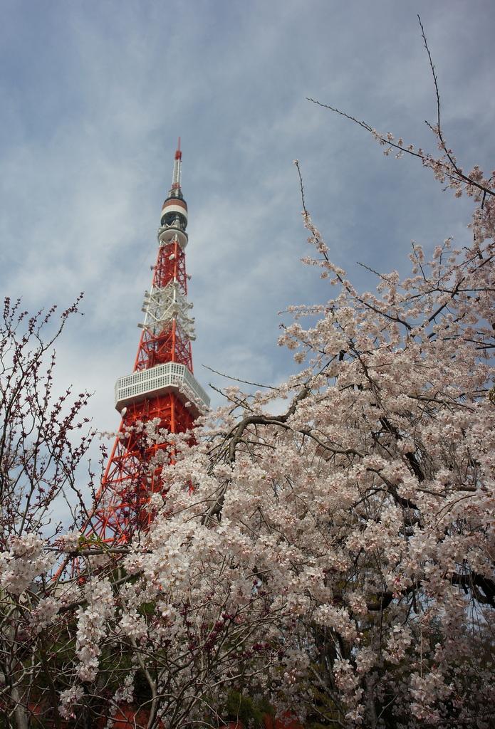 東京の桜!_c0180686_16255529.jpg
