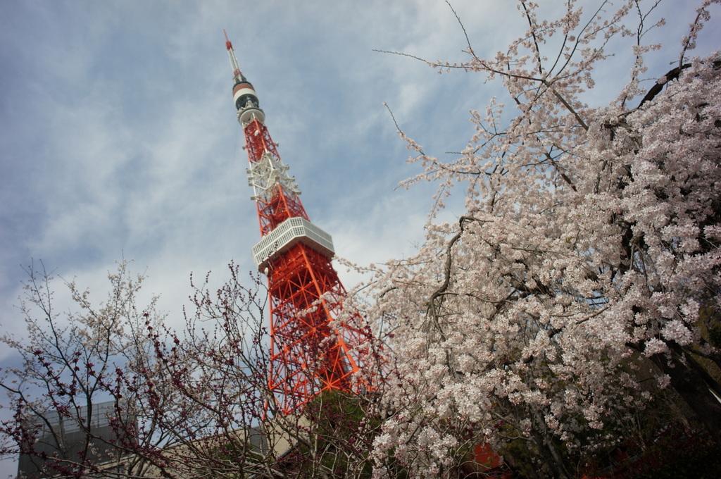 東京の桜!_c0180686_16260060.jpg