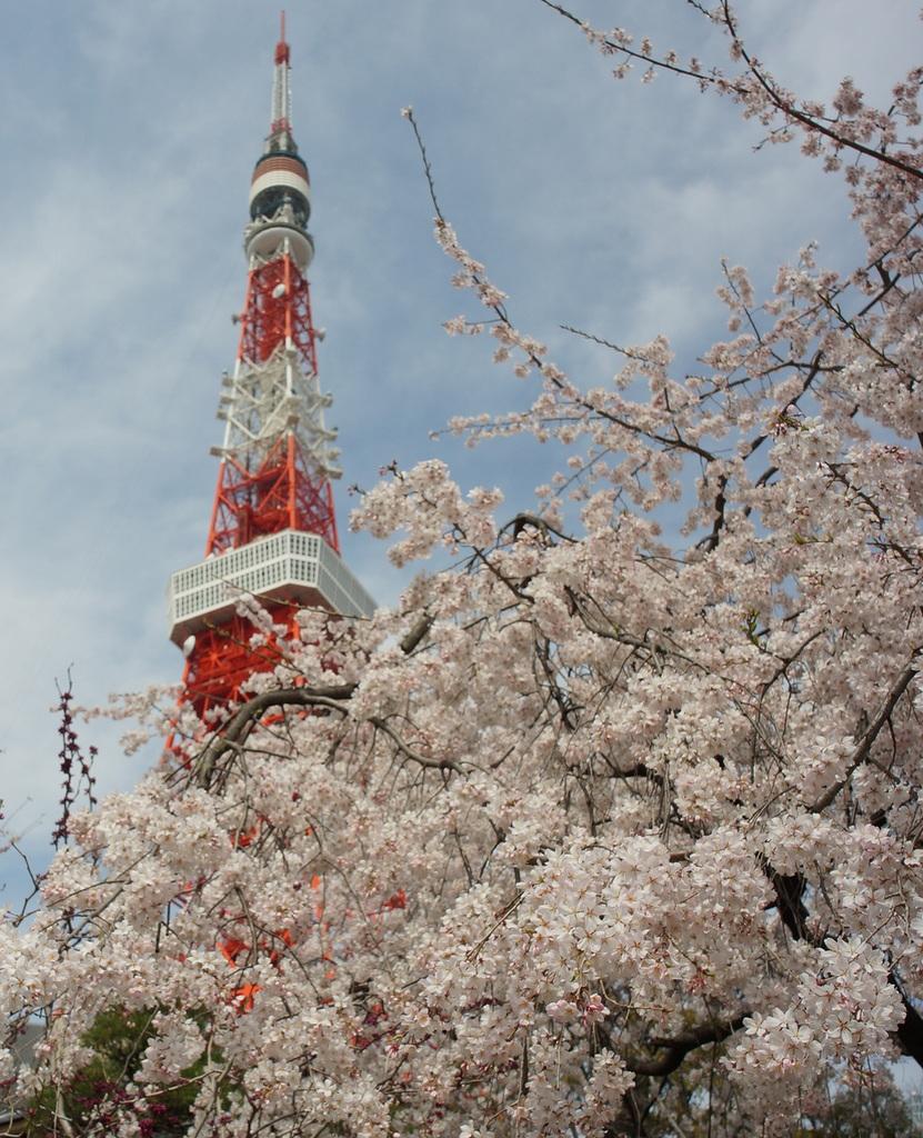 東京の桜!_c0180686_16260447.jpg