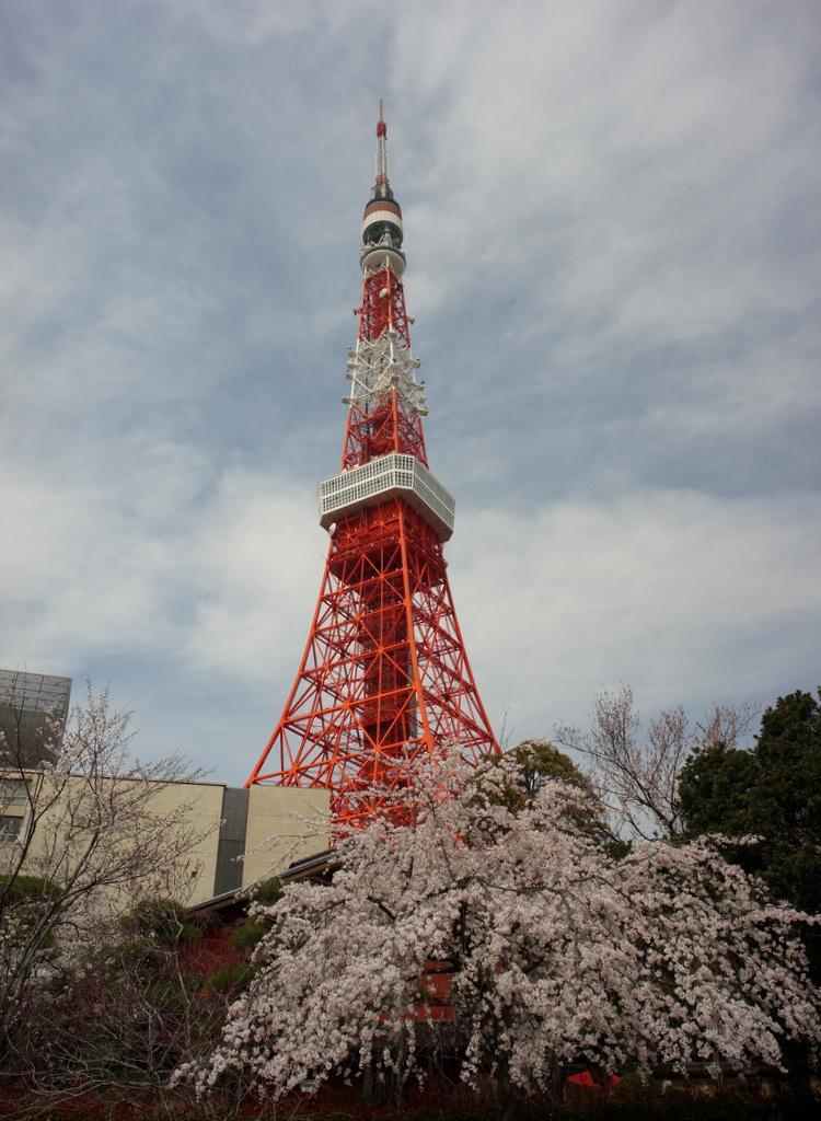 東京の桜!_c0180686_16262748.jpg