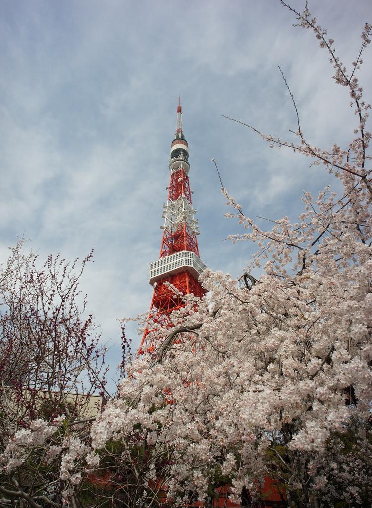 東京の桜!_c0180686_16263233.jpg