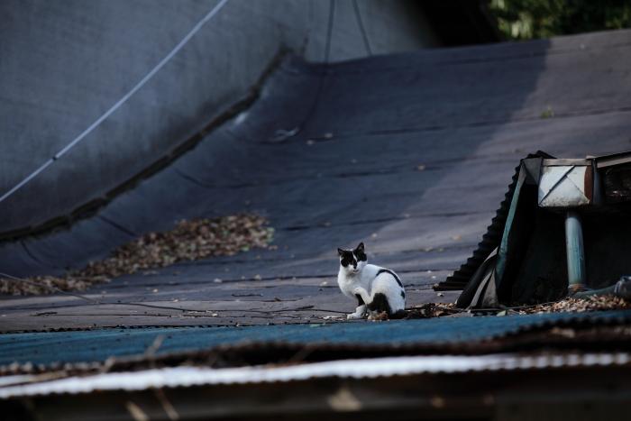 水前寺成趣園内の廃墟に住む猫_e0135098_719054.jpg