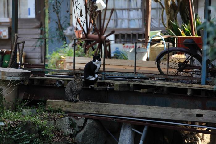 水前寺成趣園内の廃墟に住む猫_e0135098_7191164.jpg