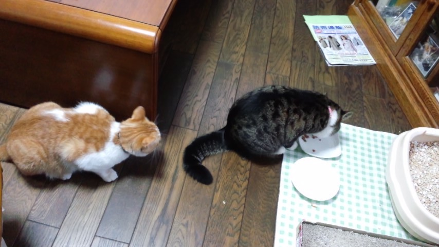 【猫】順番待ち?_f0141609_162032.jpg