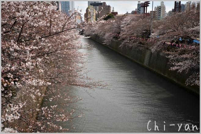 目黒川桜まつり_e0219011_13381932.jpg