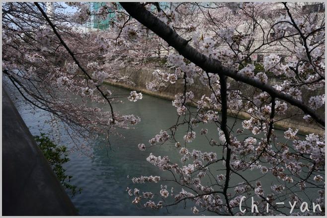 目黒川桜まつり_e0219011_13383694.jpg