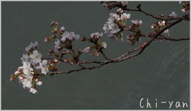 目黒川桜まつり_e0219011_13385165.jpg