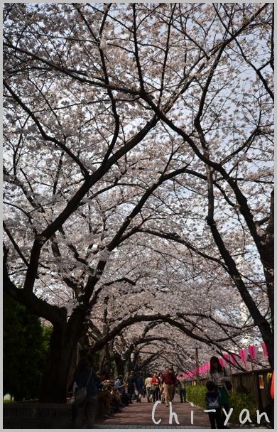 目黒川桜まつり_e0219011_13391182.jpg