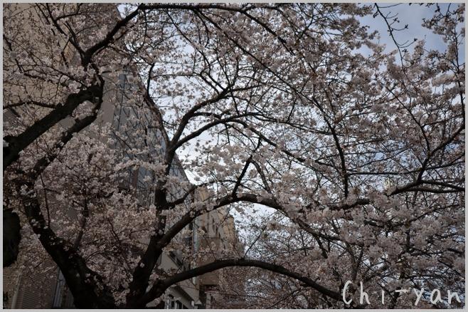 目黒川桜まつり_e0219011_13392087.jpg