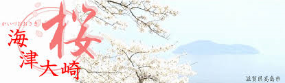 海津大崎の桜開花情報_c0110115_19485553.png