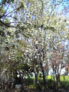 命の春_d0085018_17415278.jpg