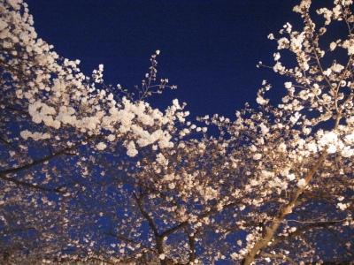 花見と言えば、目黒川!_e0010418_18194469.jpg