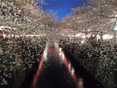 花見と言えば、目黒川!_e0010418_18195591.jpg