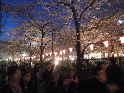 花見と言えば、目黒川!_e0010418_18232519.jpg