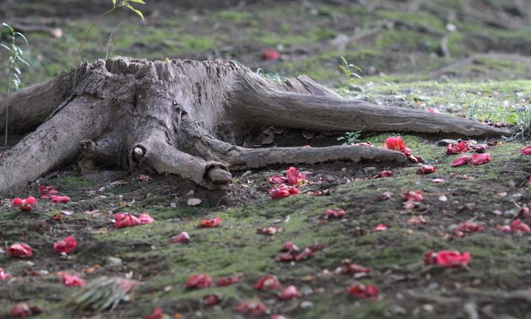 camellia._c0200027_182132.jpg