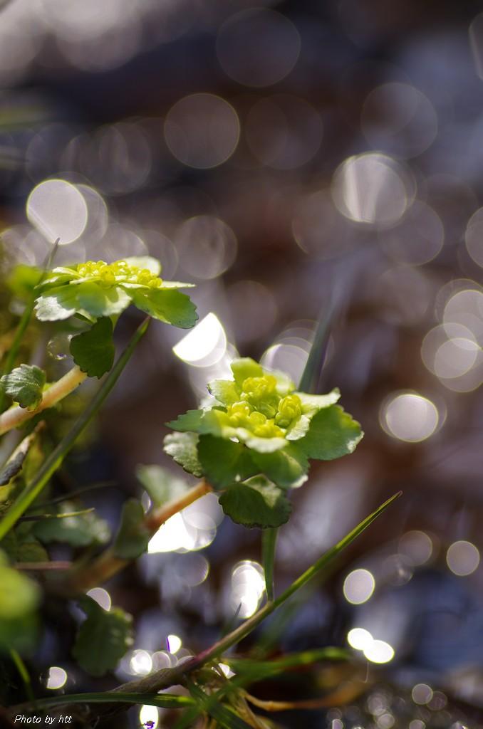2014年3月28日 七ツ森登山 ~咲き始めた春の花々~_f0148627_21375049.jpg