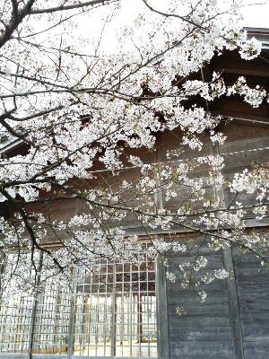 お花見_b0240634_2014798.jpg