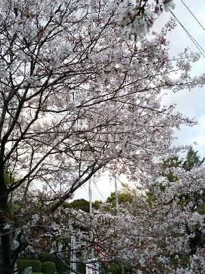 お花見_b0240634_203429.jpg