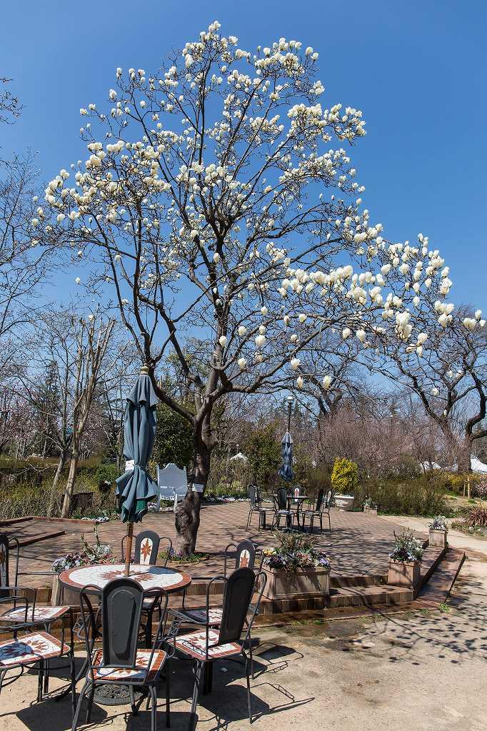 京王アンジェの春_f0044056_08403201.jpg