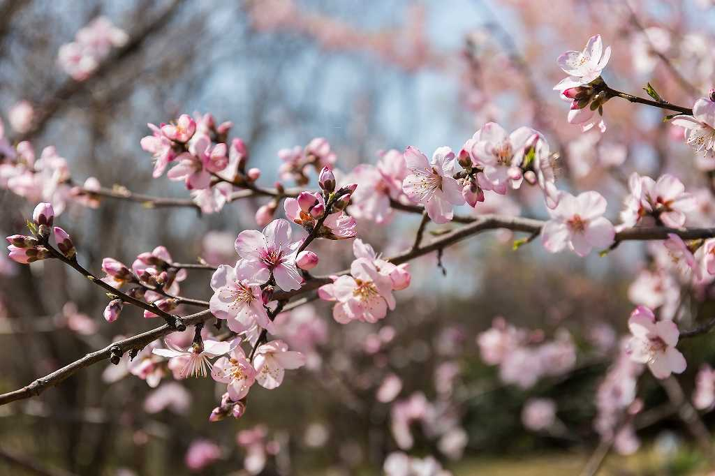 京王アンジェの春_f0044056_08511703.jpg