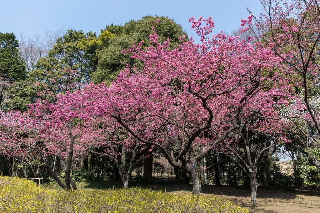 神代植物園のカタクリ_f0044056_17420186.jpg
