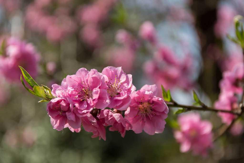 神代植物園のカタクリ_f0044056_17432291.jpg