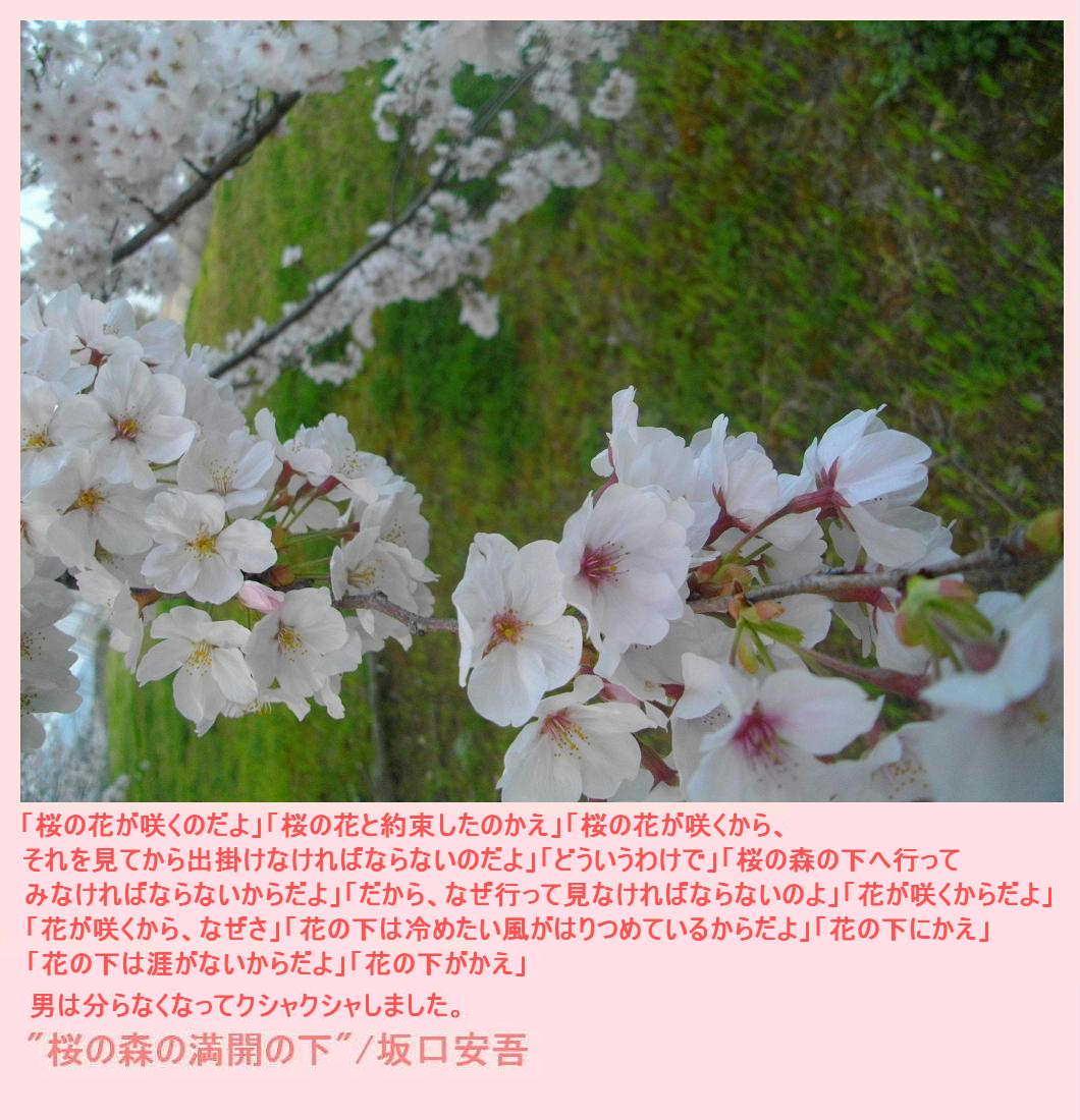 e0265768_1763632.jpg