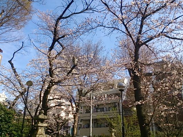 『桜』_a0075684_1712990.jpg