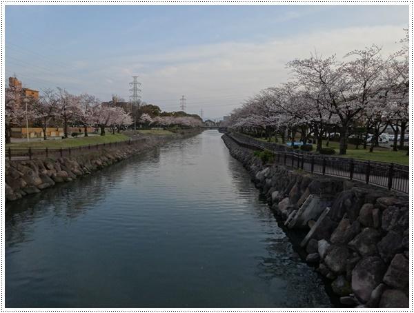 ♪♪さくら♪♪とお花見_b0175688_21463087.jpg