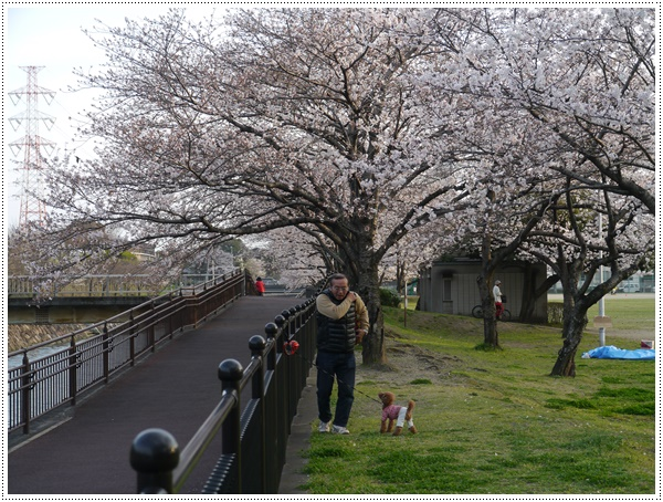 ♪♪さくら♪♪とお花見_b0175688_21492720.jpg