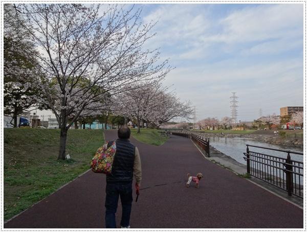 ♪♪さくら♪♪とお花見_b0175688_2149982.jpg