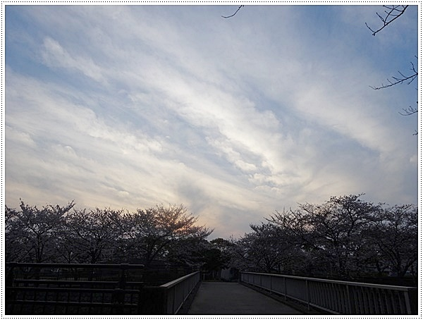 ♪♪さくら♪♪とお花見_b0175688_2201267.jpg